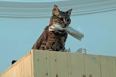 Liam Gillick's 'Cat'