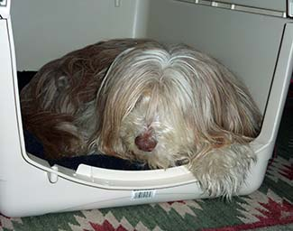 Bearded Collie in a Pet-Mate Vari-Kennel Ultra