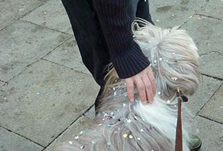 Bearded Collie at Venice Carnival