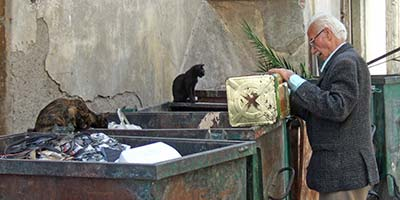 Izmir cats and dumpster