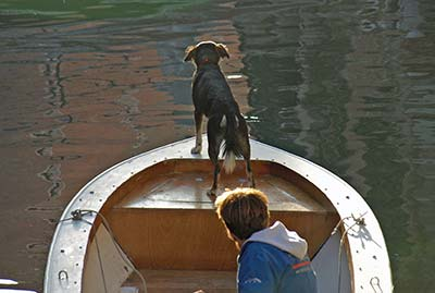 Dog on a boat in Venice