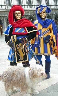 A Bearded Collie at Venice Carnival