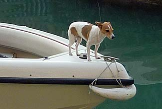 Small dog on Venice boat
