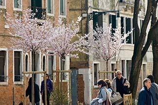 Spring blossoms in the Rio Terra dei Pensieri