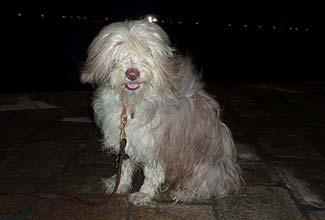 Maggie at the Punta della Dogana in Venice