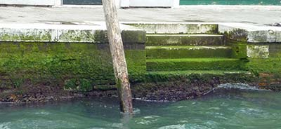 Moss on Venice canal walls