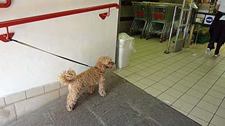 Dog in Billa supermarket