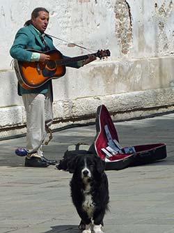 Venice street musician with dog