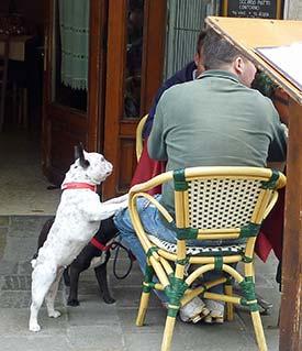 Pug in Venice