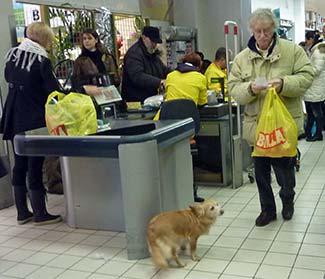 Dog in Billa supermarket Venice