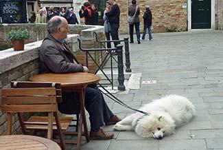 Dog near Campo San Barnaba in Venice