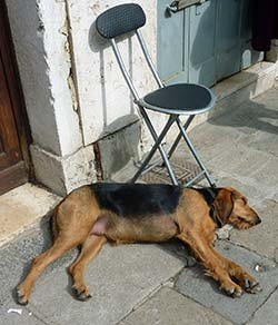 Chair security dog in Venice