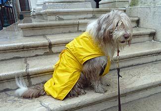 Venice dog superheroine