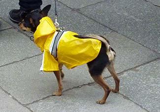 Imitation dog superhero in Venice