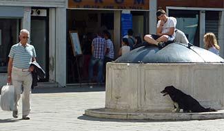 Dog in Campo San Barnaba