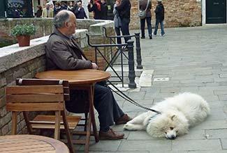White dog in Venice