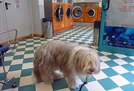 Venice laundromat