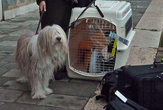 11-maggie-arrival-fondamenta-w-crate-and-luggage-325-p1100700