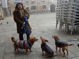 Dogs in Campo Santa Margherita
