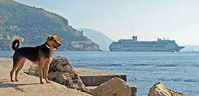 Dog in Dubrovnik