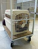 Maggie's crate at Paris CDG Airport