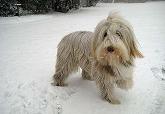 Phoebe in snow