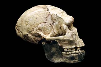 Plan-france-tautavel-skull-325