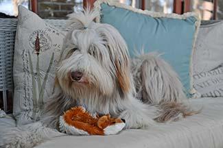 Phoebe with stuffed animal