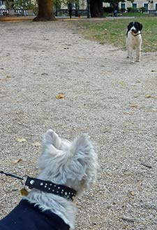 Westie and Spaniel in Quirinale Gardens Romeground-facing-spaniel-v-225-p1210629