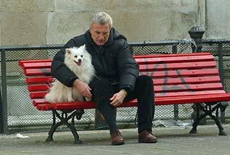 Volpino italiano dog in Venice