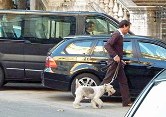Wire-haired Fox Terrier in Rome Italy