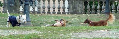 Giardini del Quirinale - Cani