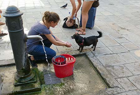 Dog at water fountain in Venice