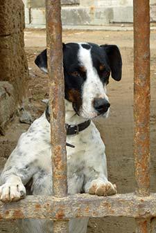 Dog in Cadiz, Spain