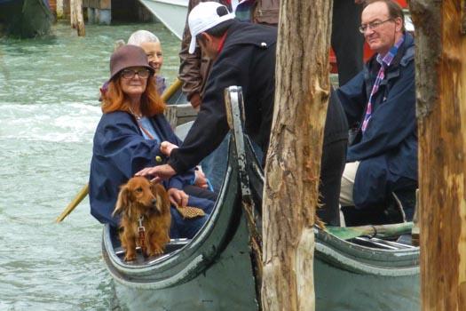 Dachshund in traghetto gondola ferry