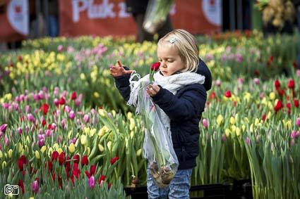 Tulip-island-little-girl-425-5