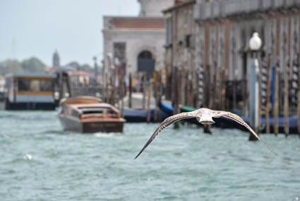 Venice seagull photo