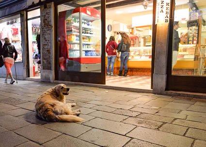 Dog in Venice photo